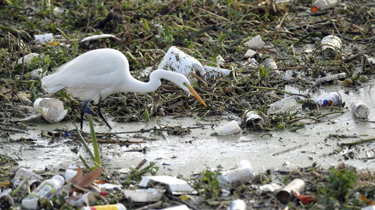 An egret searches for food among part of the estimated 150 tons of trash collected in the Los Angeles River in this photo released by the County of Los Angeles Department of Public Works December 11, 2006, after the season's first heavy rainfall over the weekend. The river, which feeds into the Pacific Ocean, contains debris including styrofoam cups, paint spray cans, plastic water bottles and used oil containers carried from cities within Los Angeles County. FOR EDITORIAL USE ONLY REUTERS/County of Los Angeles Department Public Works/Bob Riha, Jr. (UNITED STATES) - GM1DUDHJKVAA